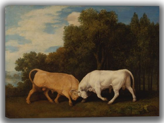 Stubbs, George: Bulls Fighting. Fine Art Canvas. Sizes: A4/A3/A2/A1 (004115)